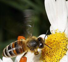 A Little Taste of Nectar! by Kim Roper