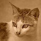 Kitty v.5 by tropicalsamuelv
