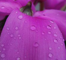 Autumn Petal Pink (1) by Vanessa  Warren