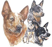 Australian Cattle Dog by BarbBarcikKeith