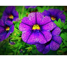 Purple lovers' flower Photographic Print