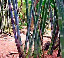 Bamboo 3 by DigitalMuse