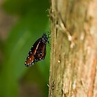 Butterfly on a tree by Gleb Zverinskiy