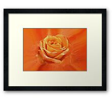 Orange rose Framed Print