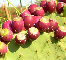 Prickly Pear Rippen by mwfoster