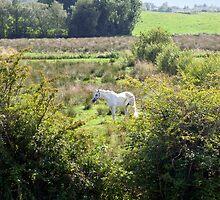 lone horse feeding by morrbyte