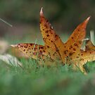 Leaf fan by Jeff Stroud