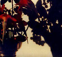 Nasturtiums by Erica Corr