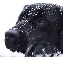 Snow Fun by eleganceinimagery