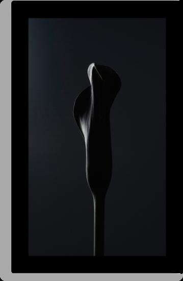 BLACK BLACK WIDOW by narabia