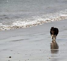 beach walker by mockbird