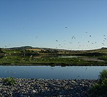 Tern Colony by Monster