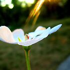 Lighting on Flower by Tommy Seibold