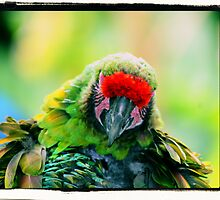 Parrot Face by kalliope94041