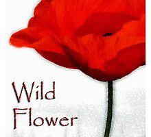 the wild flower by shall