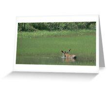 Big Bull Moose Greeting Card