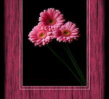 PINK TRINITY by Katseyes