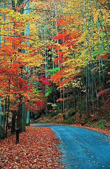 AUTUMN ROAD,RICH MOUNTAIN by Chuck Wickham