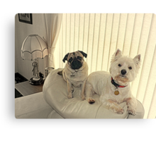 The Westie and the Pug ! Canvas Print