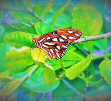 Butterfly bling by ♥⊱ B. Randi Bailey