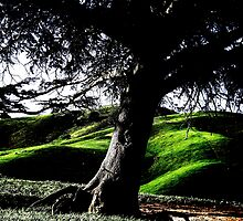 A Living Landmark - The Cedar Of Lebanon by Michael Kienhuis