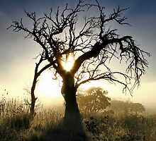 MY MATES THE DEAD TREES. IN FOG by CRSPHOTO