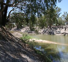 River Gums on Darling River. by Ross Campbell