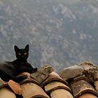 Delphi Cat by Geoff White