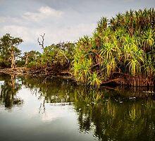 Yellow Water Kakadu by Russell Charters