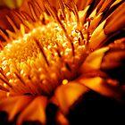 Firefly by diongillard