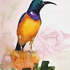 Orange-breasted Sunbird (Nectarinia violacea) by Claudia Dingle