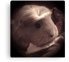 Brenda the Guinea Pig (Old Style) Canvas Print