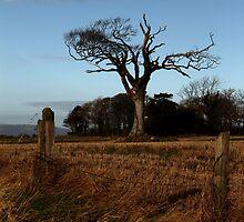 The Rihanna Tree, And Friends! by Wrayzo