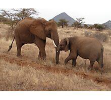 Elephants, Samburu, Kenya Photographic Print