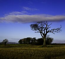 The Rihanna Tree, With The Blues! by Wrayzo