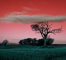 The Rihanna Tree, Really Wild! by Wrayzo