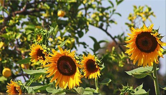 Sum,Sum Summertime by Chet  King