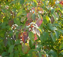 White Berry Bush by steelwidow