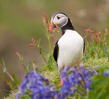 Hello! by Christopher Cullen