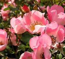 Baby Pink Blossoms  by Linda  Tenenbaum