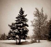 Mourning in Winter #2 (Two Trees) (Breadalbane, Prince Edward Island, Canada, December 2008) by Edward A. Lentz