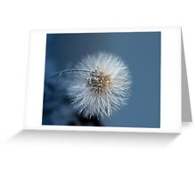 Dandelion Blues Greeting Card