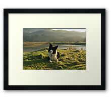 Indy on Glan-Y-Mor-Elias Framed Print