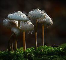 Fungus eats fungus by hanspeters