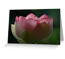 Soft Touch Lotus Greeting Card