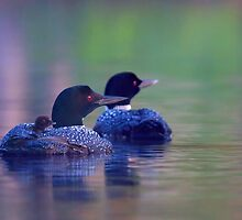 Morning outing - Common loon by Jim Cumming