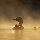 Loons in the mist by Jim Cumming
