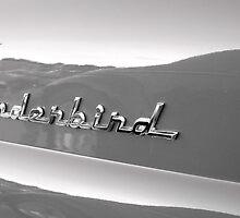 T Bird by Susan Zohn