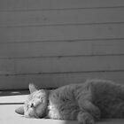Sun Worship by Tanya B. Schroeder