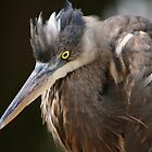 HERON HUNTER! by John Davis
